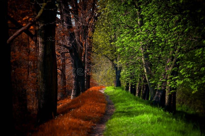 Weg im magischen Wald, im Sommer und im Herbst lizenzfreie stockbilder