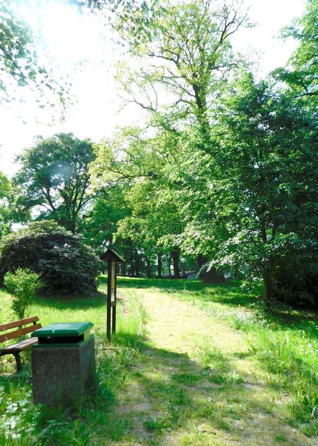 Weg im Park am sonnigen Tag stockbilder