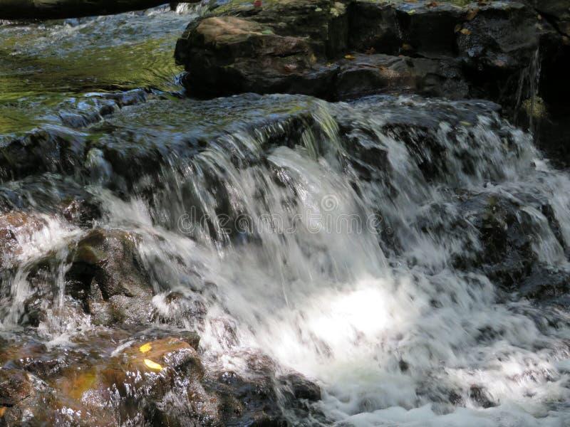 Weg im Wald lizenzfreie stockfotografie