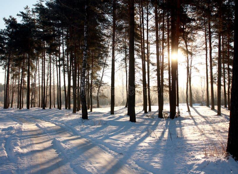 Weg im Wald auf einem eisigen Januar-Morgen stockbild