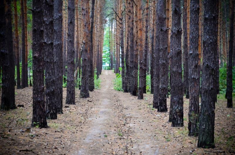 Weg im Wald im Herbst stockbild
