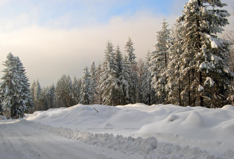 Weg im Winterwald stockbilder