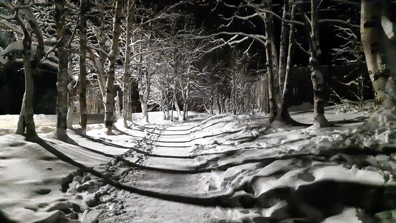 Weg langs de Weg bij Nacht in Harde Vorst royalty-vrije stock foto's
