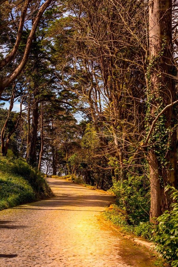Weg in magisch donker bos stock afbeelding