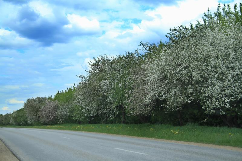 Weg met appelbomen in de aard van Letland royalty-vrije stock foto