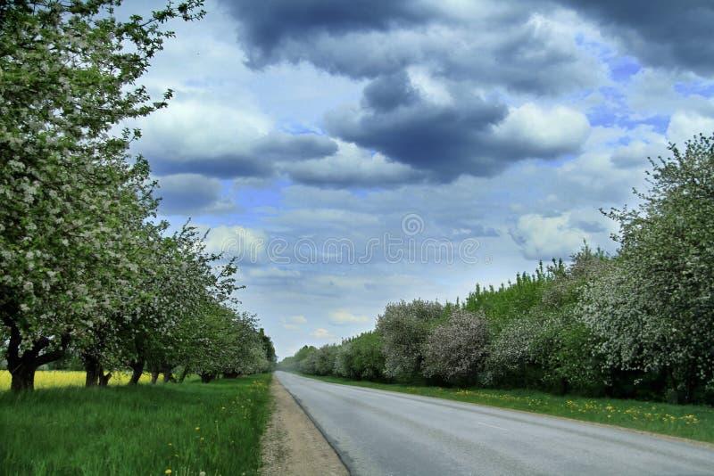 Weg met appelbomen in de aard van Letland royalty-vrije stock afbeelding