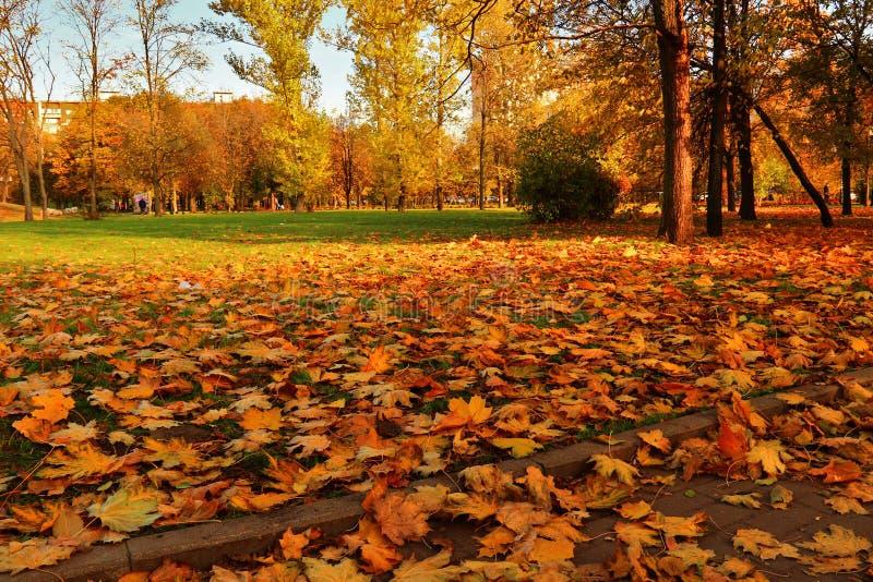 Weg met gevallen bladeren in stadspark dat wordt behandeld stock afbeelding