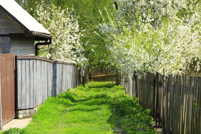 Weg met groen gras in dorp wordt behandeld dat Kleine comfortabele straat in platteland in de lente royalty-vrije stock foto's
