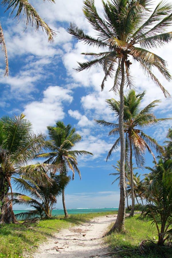 Weg met palmen aan oceaan royalty-vrije stock fotografie