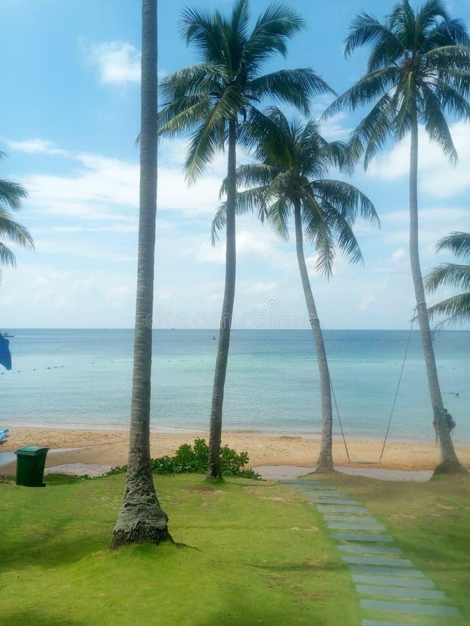 Weg met palmen die tot het overzees leiden stock fotografie
