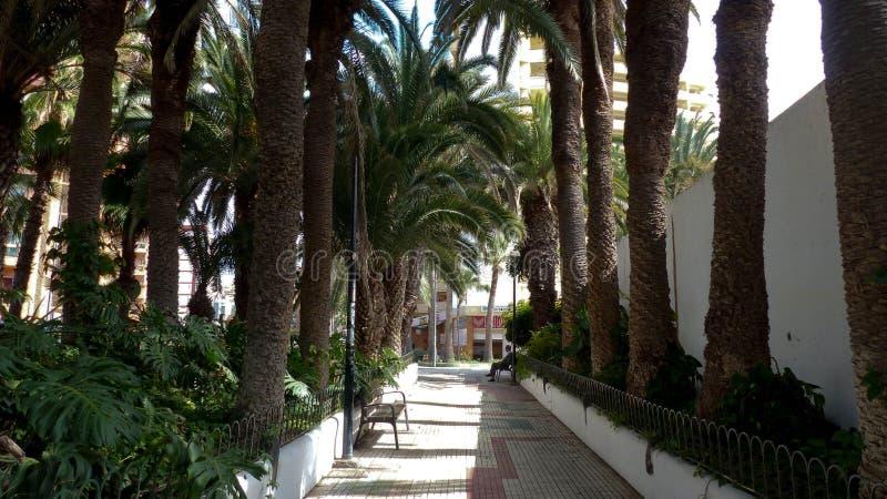 Weg met palmen stock foto
