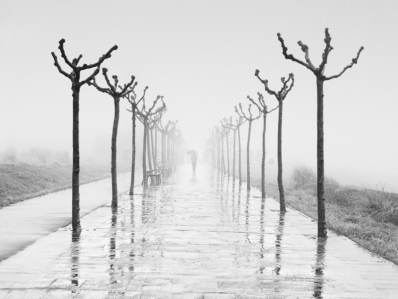 Weg met persoon die met paraplu op regenachtige dag bij de winter lopen stock afbeelding