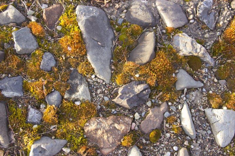 Weg met stenen met mos worden behandeld dat royalty-vrije stock foto