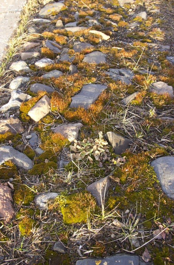 Weg mit den Steinen bedeckt mit Moos stockfoto
