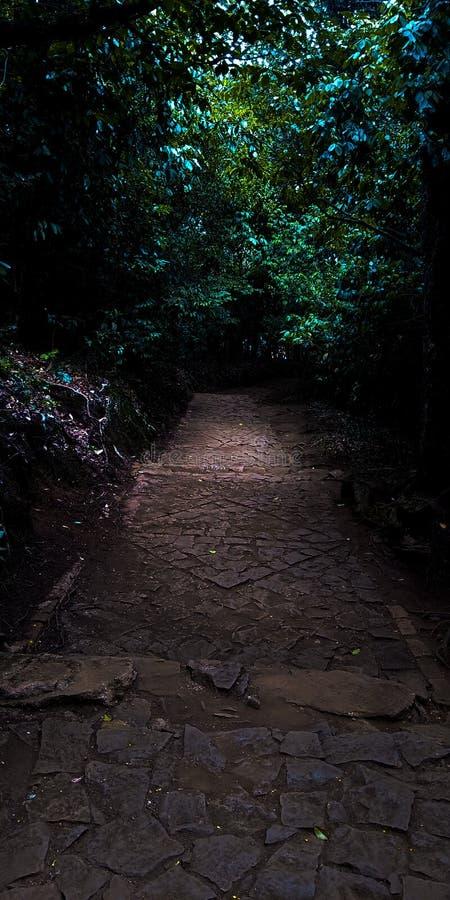 Weg mitten in einem Dschungel lizenzfreie stockfotografie