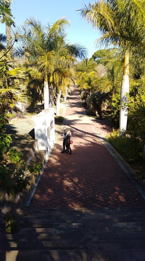 Weg nach innen des botanischen Gartens lizenzfreies stockbild