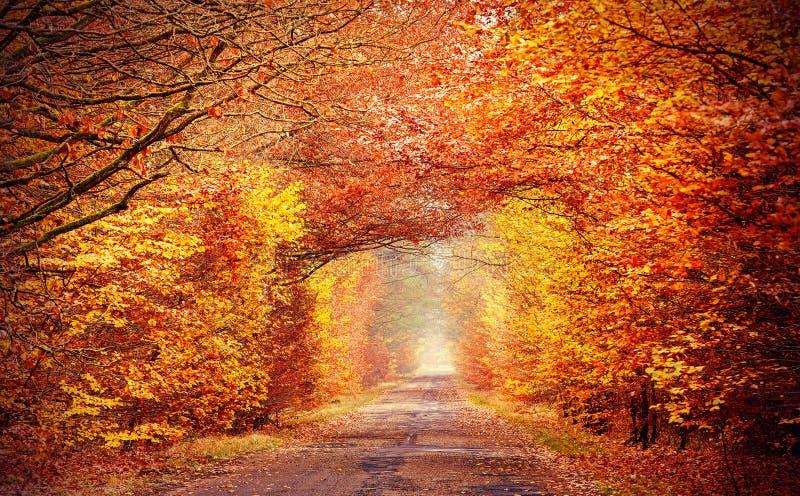 Weg in nevelige herfst bos, intense gefiltreerde kleuren royalty-vrije stock foto