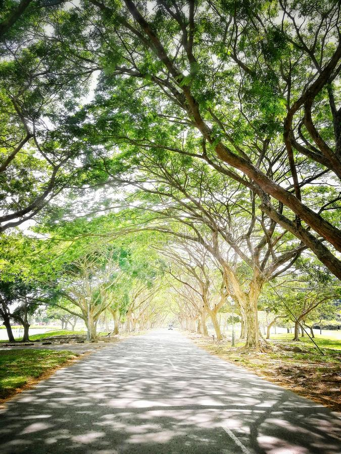 Weg onder bomen royalty-vrije stock foto's