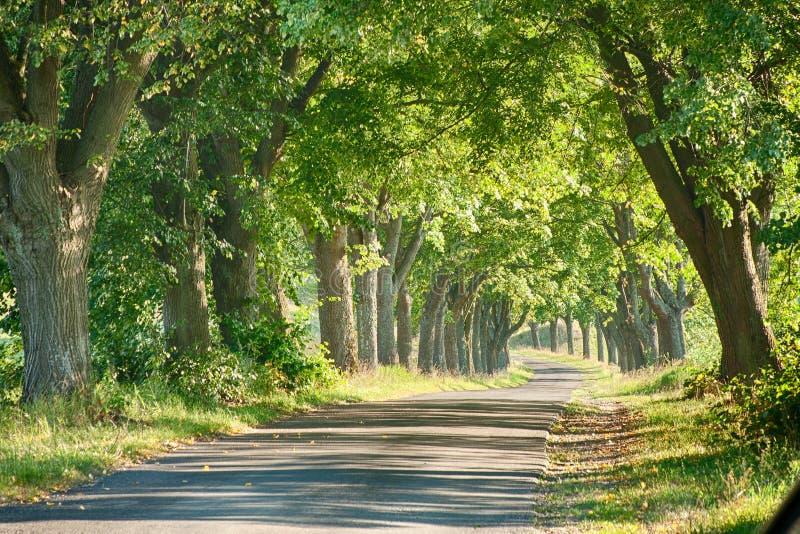 Weg onder de bomen royalty-vrije stock fotografie