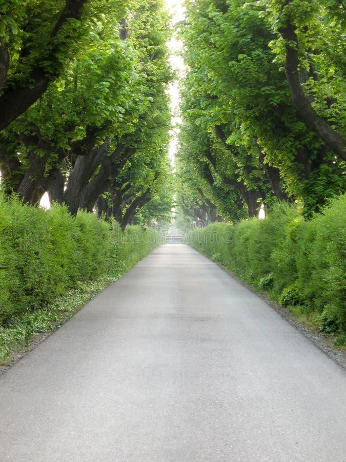 Weg onder de bomen royalty-vrije stock afbeelding