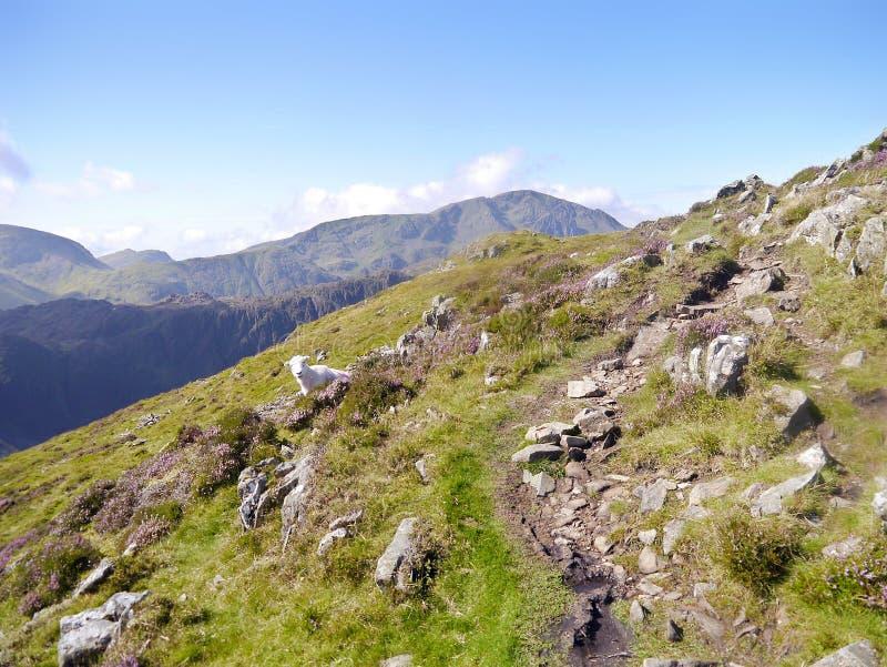 Weg op hoge helling met verder bergen stock afbeeldingen