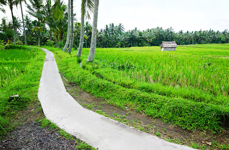 Weg in padievelden, Bali stock afbeelding