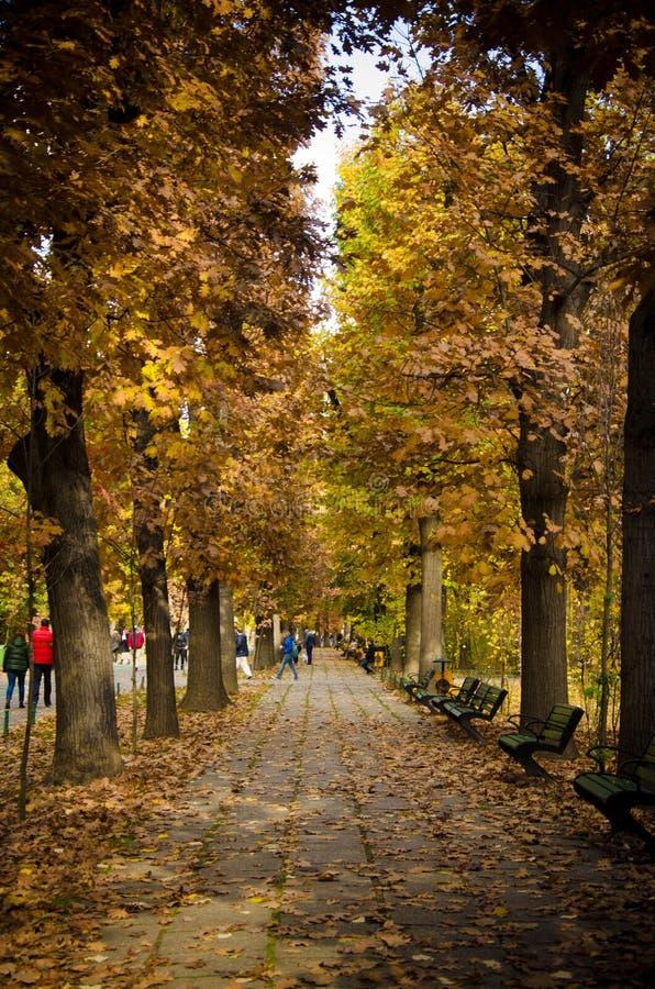 Weg in Parklandschap Gouden Autumn Herastrau Bucharest Romania stock afbeelding