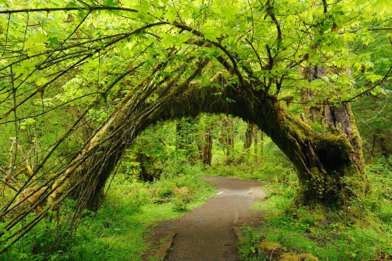 Weg in regenwoud royalty-vrije stock afbeelding