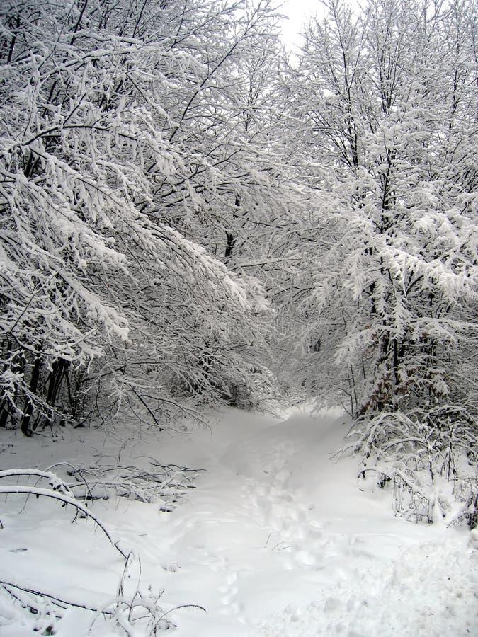 Weg in sneeuw royalty-vrije stock foto