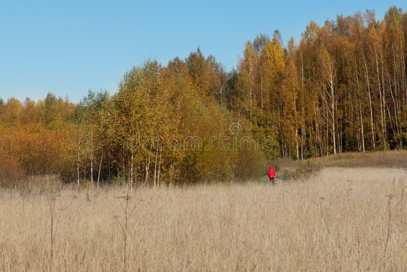 Weg tussen bos en gebied stock afbeeldingen