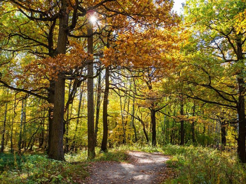 weg tussen eiken bomen in bos van stedelijk park stock foto