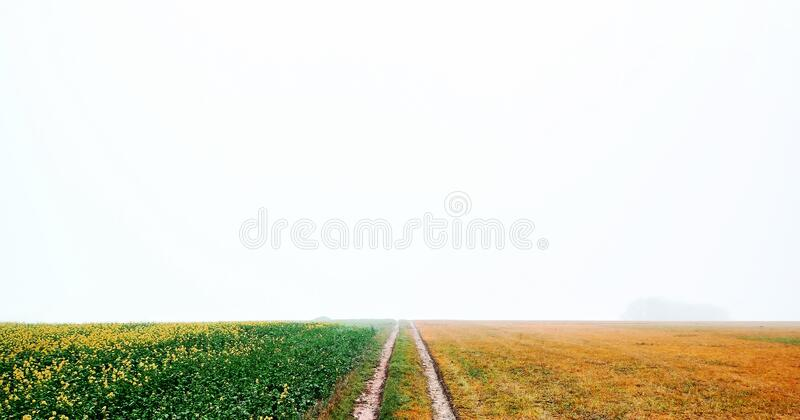 Weg tussen geel met meerdere kleuren en groene velden stock afbeelding