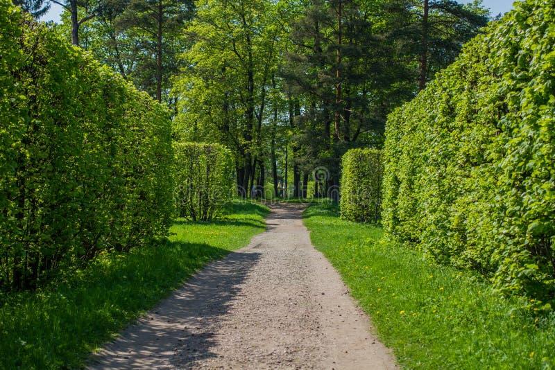 Weg tussen groene haag royalty-vrije stock foto's