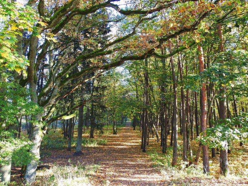 Weg und bunte Herbstbäume, Litauen stockfoto