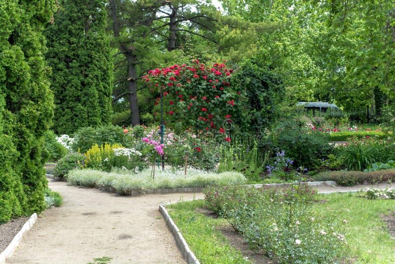 Weg und Granne mit grünem Gras in einem sonnigen Park des grünen Sommers lizenzfreie stockfotografie