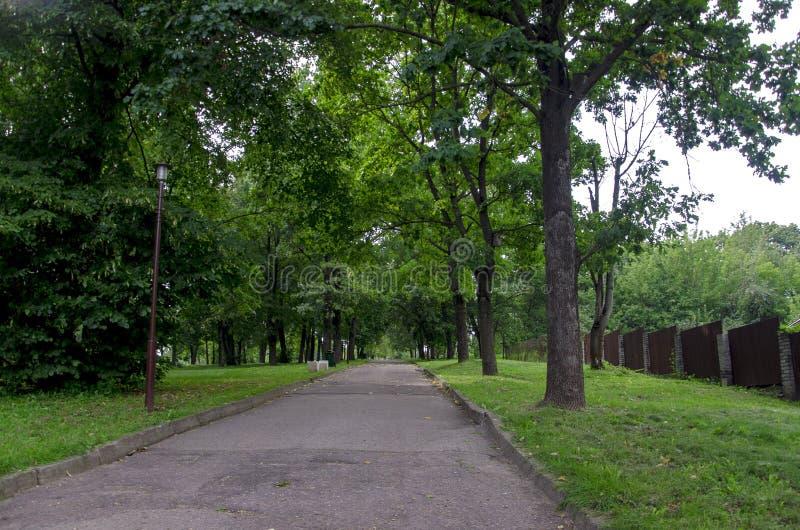 Weg und Granne mit grünem Gras in einem sonnigen Park des grünen Sommers lizenzfreie stockfotos