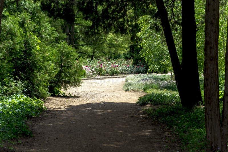 Weg und Granne mit grünem Gras in einem sonnigen Park des grünen Sommers stockfotos