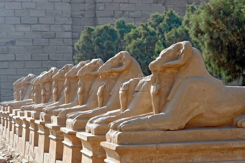 Weg van de RAM-geleide Sfinxen in Karnak-Tempel - Luxor, Egypte royalty-vrije stock foto's