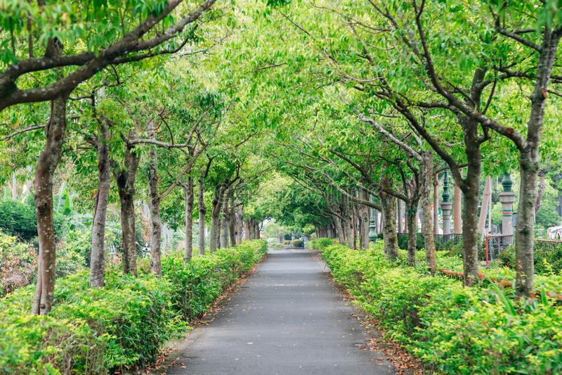 Weg van de de zomer de groene boom stock afbeeldingen