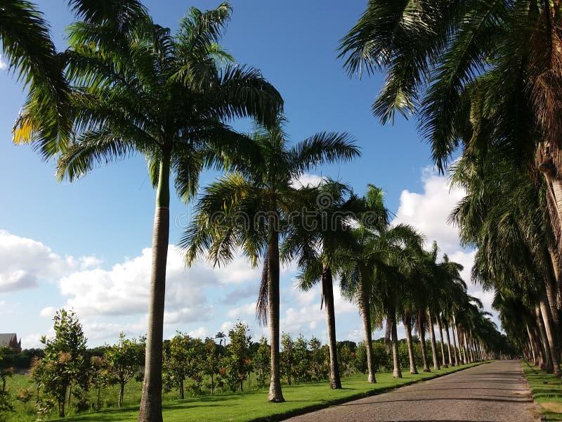 Weg van palmtree stock foto