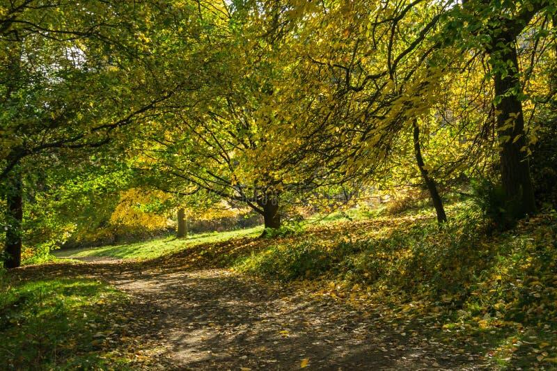 Weg von Bäumen gesäumt im Herbst gebadet im gescheckten Sonnenlicht stockfotografie