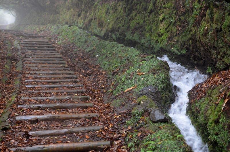 Weg von meldet einen nebeligen Wald entlang Levada DOS Cedros an: Reitroute von Fanal nach Ribeira DA Janela, Madeira stockfotografie