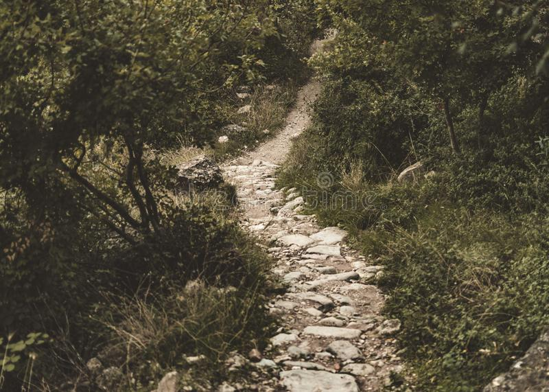 Weg von Steinen, der durch einen üppigen Wald läuft stockbild