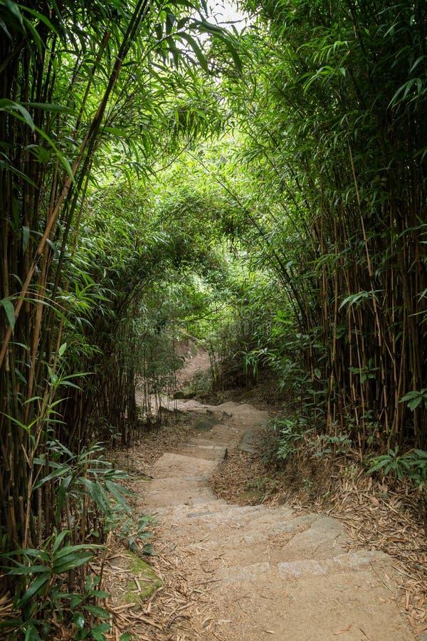 Weg in weelderig bamboebos in Hong Kong royalty-vrije stock foto's