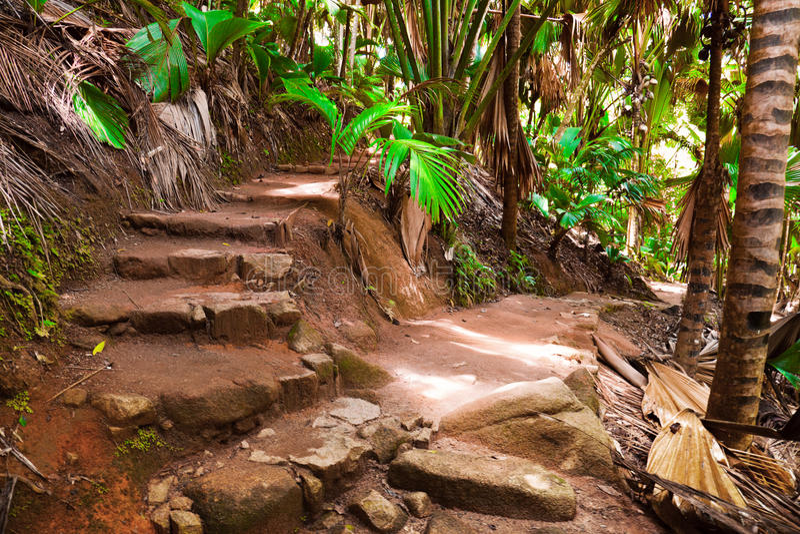 Weg in wildernis, Vallee DE MAI, Seychellen royalty-vrije stock foto's