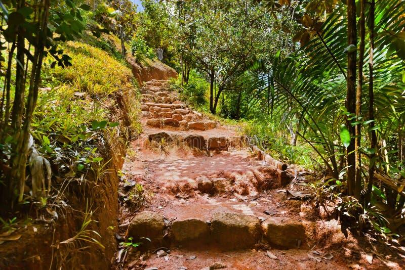 Weg in wildernis - Vallee DE MAI - Seychellen stock afbeelding