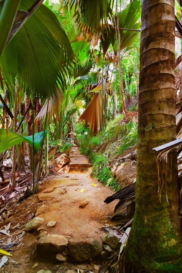 Weg in wildernis - Vallee DE MAI - Seychellen stock foto