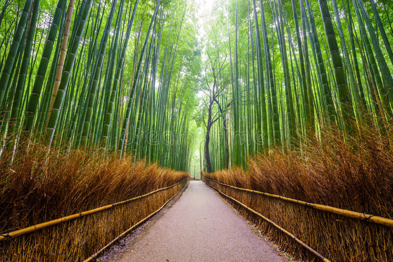 Weg zum Bambuswald, Arashiyama, Kyoto, Japan stockbilder