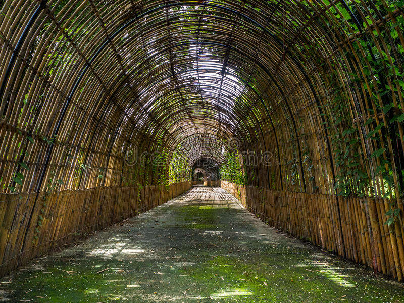 Weg zum Bambuswald, Chiang Mai, Thailand stockbild