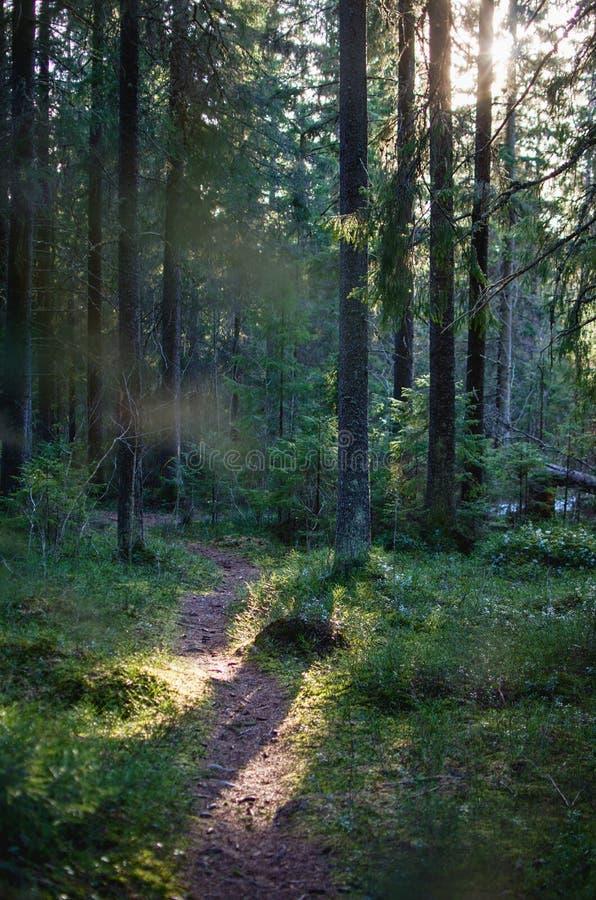 Weg in Zweeds Bos door Zonsondergang stock foto